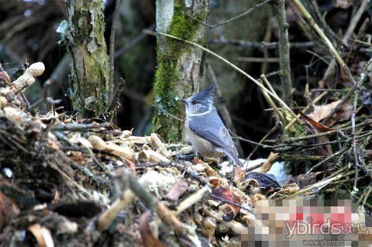 经湖北省野生动物保护总站教授级高工朱兆泉和鸟类